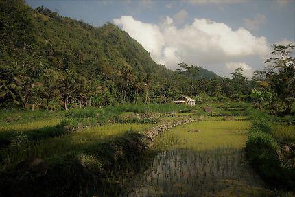 Promenade dans les rizières de Sidemen, Bali