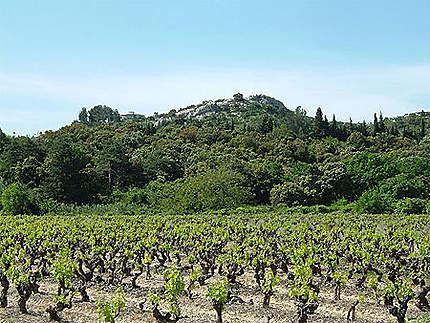Terre du Premier rosé de France