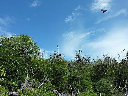 L'île aux chauves-souris géantes
