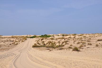 Réserve naturelle Doñana