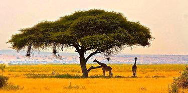 Safari de rêve autour du Kilimandjaro