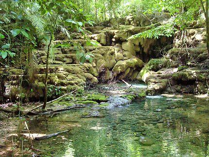 Jungle et eau douce près des ruines