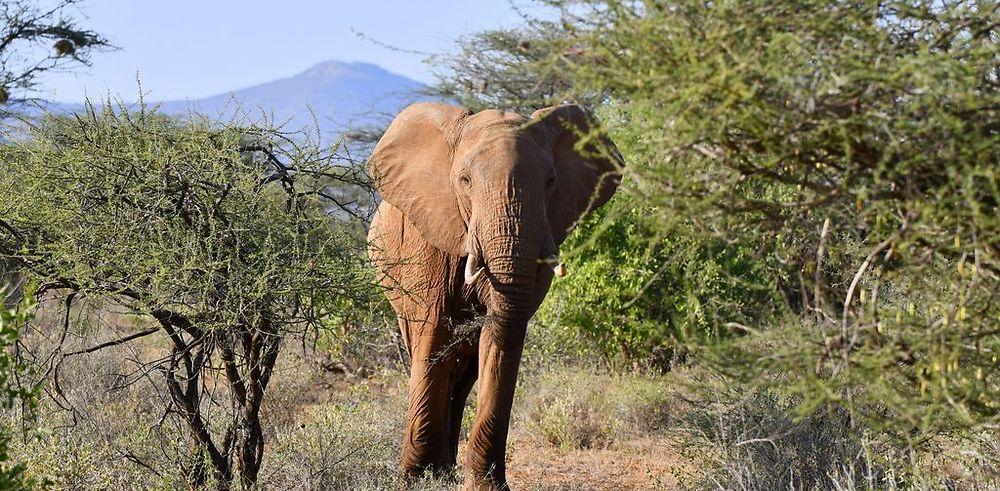 Au coeur du Kenya ; le Kenya dans le coeur