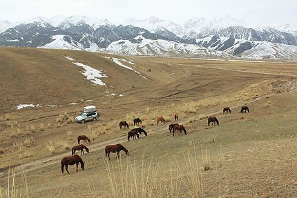 Camping au Kirghizistan