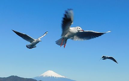Shimizu - Vol au-dessus du volcan