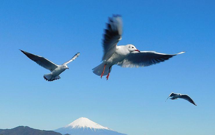 Vol au dessus du Mont Fuji, Japon