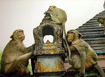 Singes au temple d'Ayutthaya