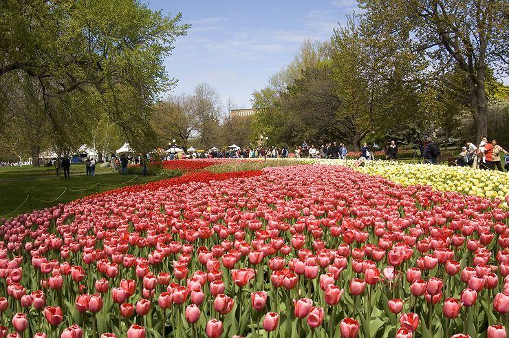 Festival canadien des tulipes à Ottawa et à Gatineau (Ontario, Québec)