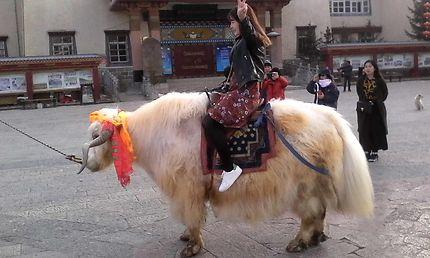 Monture yak