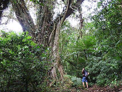 Matagalpa - Balade dans la Selva Negra