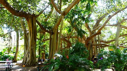 Botanic Garden de Rockhampton