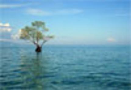 Solitude sur l'île Bunaken