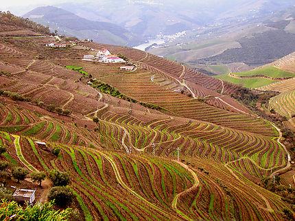 Les vignobles de la Vallée Douro