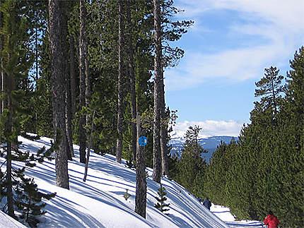 Ombres sur neige