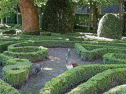 Paons dans jardins à la française : Oiseaux : Namur ...