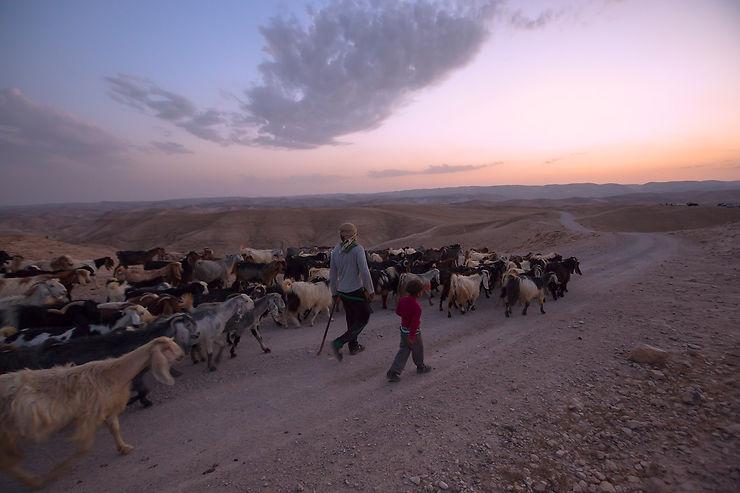 Berger bédouin avec son troupeau, étape Nébi Musa - Mar Saba