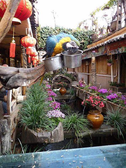 Ruelle à Lijiang
