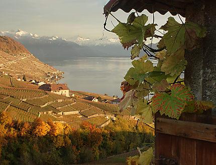 Vignoble du Lavaux