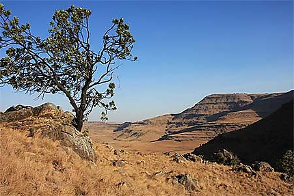 Randonnée dans le Drakensberg