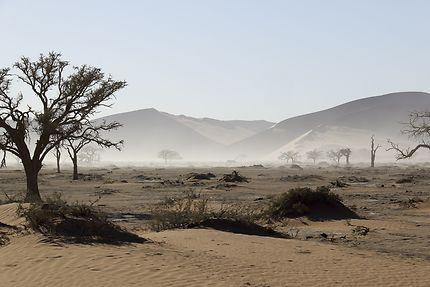 Les dunes de Sossusvlei au petit matin