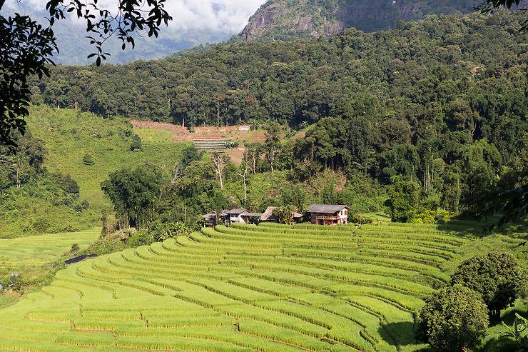 La Thaïlande du Nord, verte et authentique