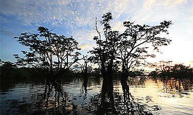 Amazonie (Oriente)