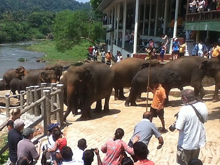Balade des éléphants de l'orphelinat