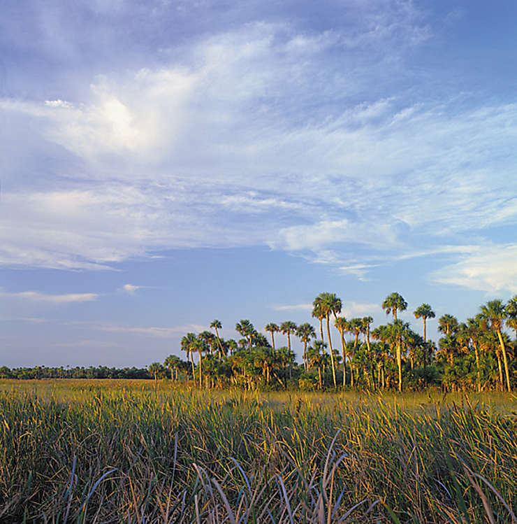 Everglades, la Floride au naturel