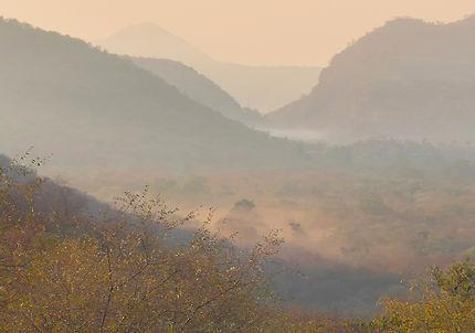 Début de matinée dans la réserve de Ranthambore