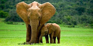 Afrique du Sud - Safaris en Famille - 7 jours