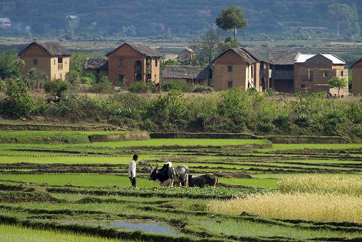 Rizière de la région d'Antsirabe
