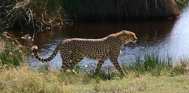 Afrique du Sud - Safaris en liberté – 7 j