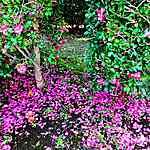 Fleurs d'automne au Japon