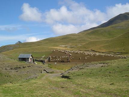 Col de Vars et le parcage des moutons