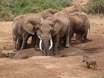 Addo NP