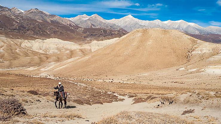 Western himalayen