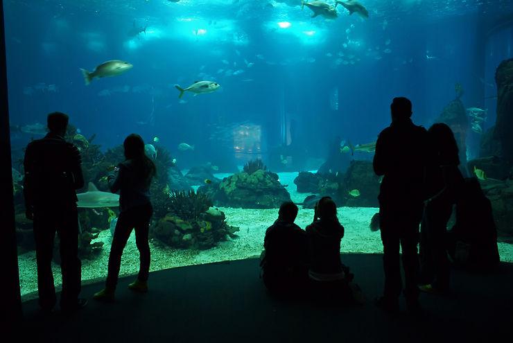 Explorer la vie sous-marine à l'Oceanário de Lisboa