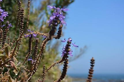Sur la pointe sud de l'Andalousie, face à Tanger