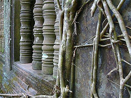 Mousses, racines et pierre