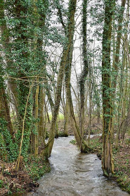 La forêt près d'Obernai, Alsace