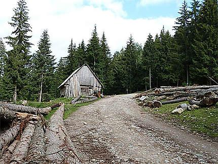 Le bois au bord du chemin