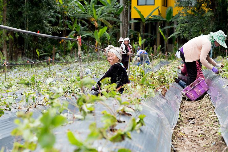 Parc national Doi Inthanon : du caviar made in Thaïlande