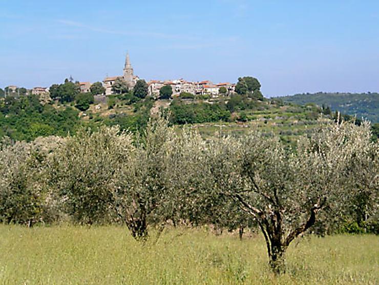 Truffes, vins et huile d'olive