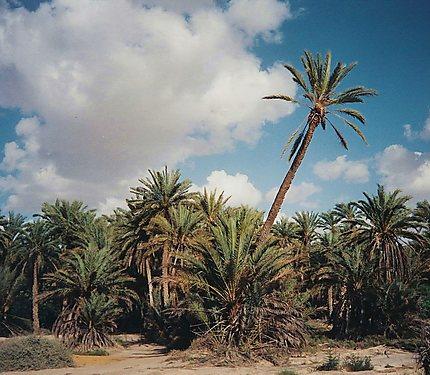 Tozeur - L'oasis de la vie