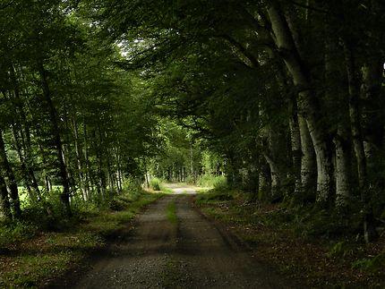 Chemin forestier, Saint-Merd-la-Breuille