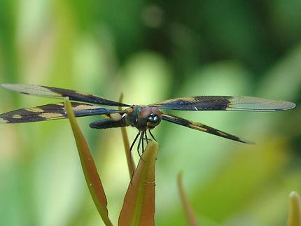 Une belle réserve naturelle à Kumarakom