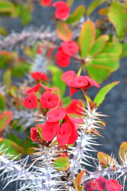 Jardin des cactus Lanzarote