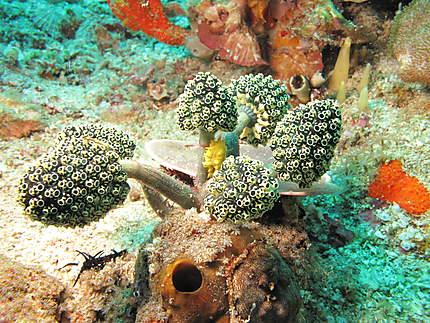 Sous la mer à Bali