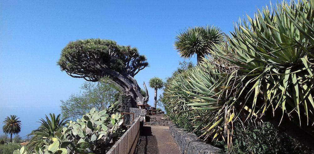 Trois îles des Canaries : La Gomera, La Palma, Tenerife