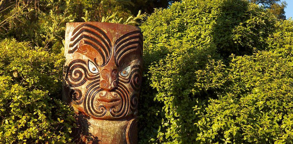 Nouvelle Zélande - Des kiwis et des pommes